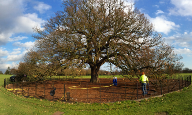 Tree Rescue saves veteran trees for free