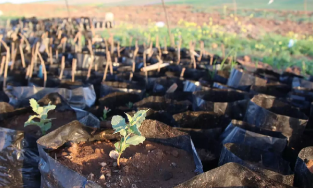 Here's why we're planting trees in northern Syria