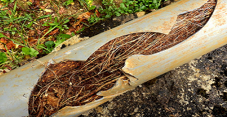 UKDN Waterflow releases report on tree root growth impact on urban drainage