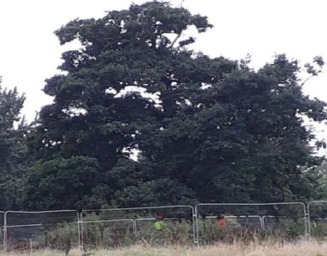 school trees