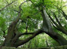 east Leeds tree