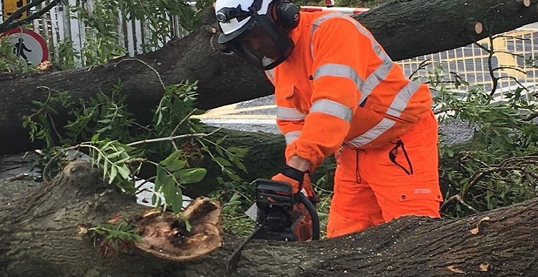 Network Rail won't fell more trees despite calls from ORR chief