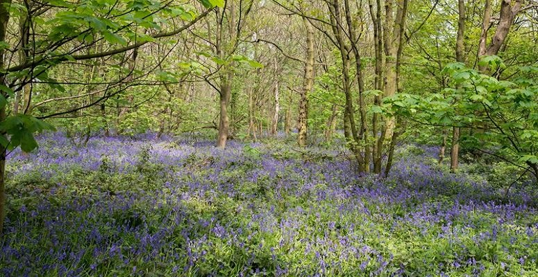 Record support for Woodland Trust's Campaign