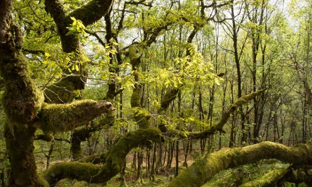 Atlantic Woodland Alliance  to save Scotland's rainforest