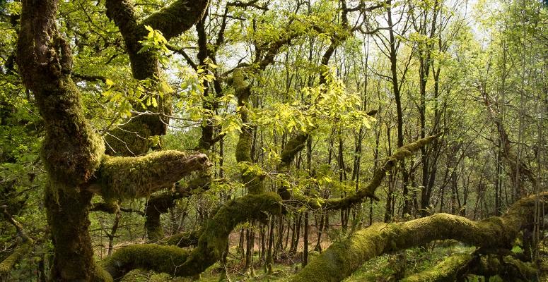 Atlantic Woodland Alliance