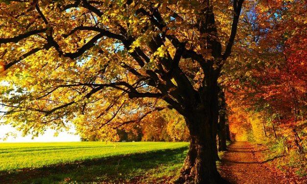 Bridgnorth sign Woodland Trust Tree Charter
