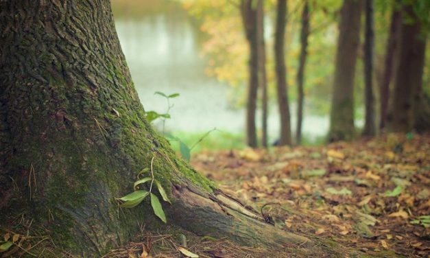 Ireland to plant 440m trees by 2040