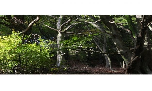 Ancient woodland saved by Welsh Government