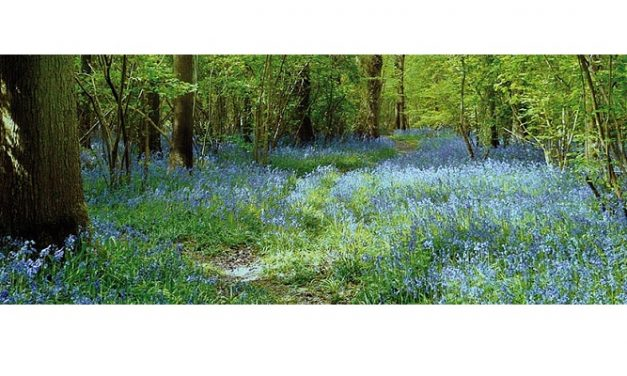 HS2 to go ahead with destroying South Cubbington Wood
