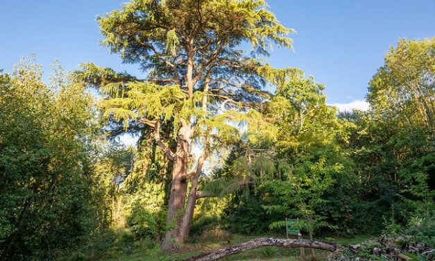 The Woodland Trust restores arboretum in Wales
