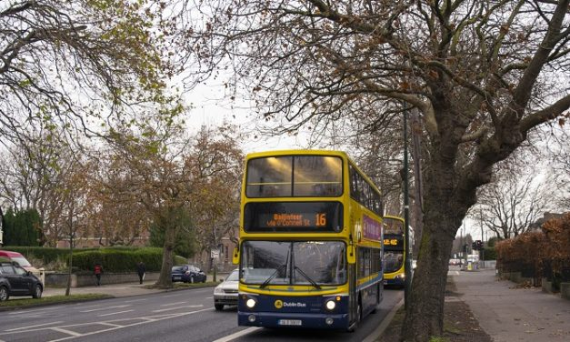 Council chief in Dublin says he would cut down every roadside tree