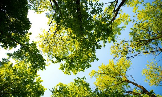 Mayor marks Tree Week by urging Londoners to plant 100,000 trees
