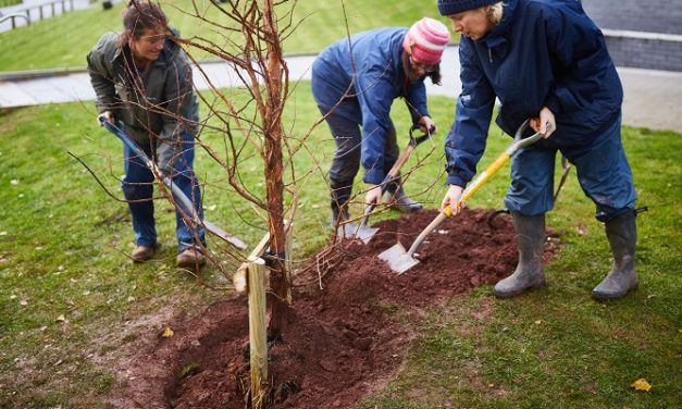 Bridgwater & Taunton College celebrates centenary year with tree planting