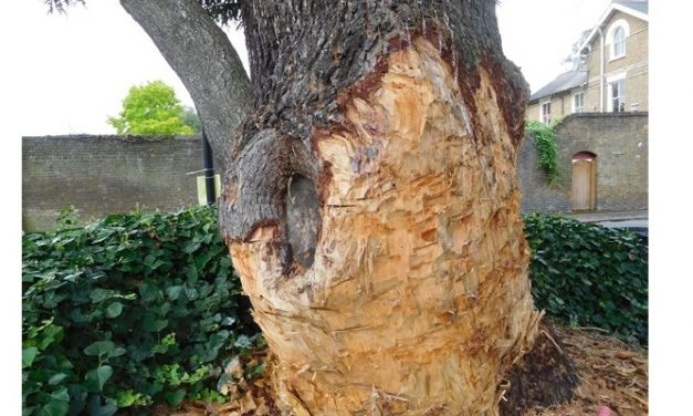 Man ordered to pay £61,000 for damage to tree