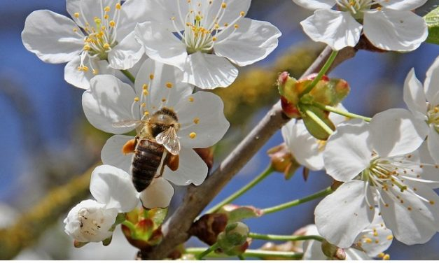 350 trees to be planted in Hertfordshire to help save bees