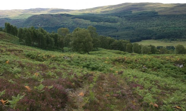 700 acre mountaintop woodland of 100,000 trees to be planted in Scotland