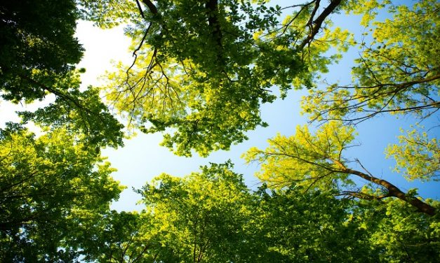 Over 60 trees have been distributed to help 'green Southampton'