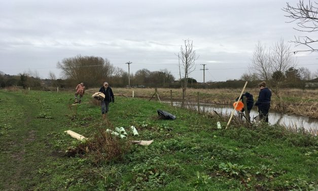500 new trees planted along a Suffolk River