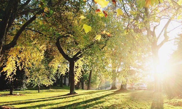 Second round of Urban Tree Challenge Fund opens