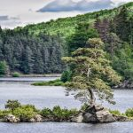 European Tree of the Year Awards 2020 Results