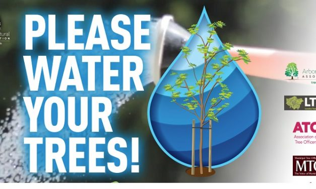 AA and Tree Officer Groups Launch Watering Campaign