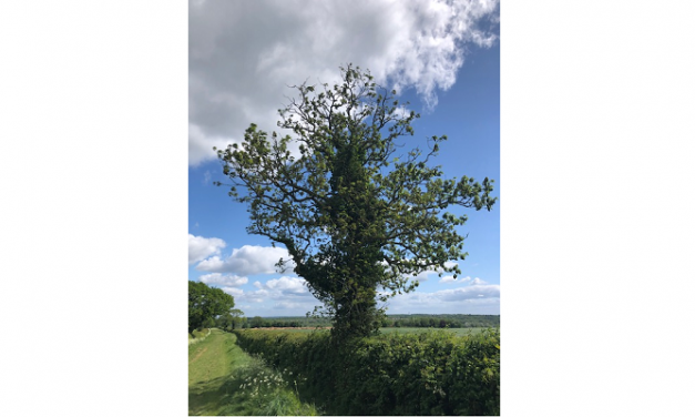 Ash dieback threatens trees in Milton Keynes