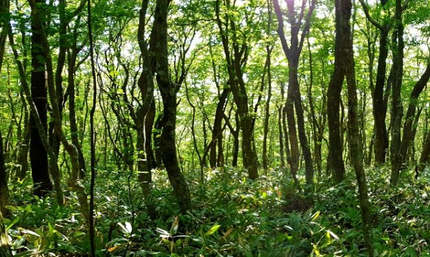 New reservoir threatens ancient woodland, says Woodland Trust
