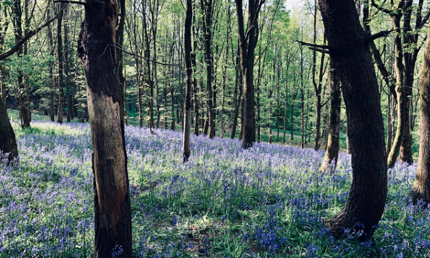 Forestry charity reveals what's putting land owners off planting new woodland