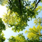 Southwark tree officers managing asset worth £165m