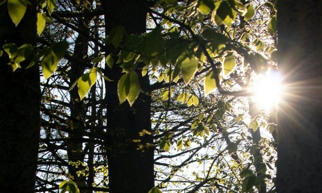Gloucestershire prevent the spread of ash dieback