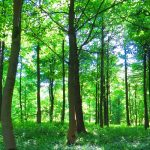 Natural regeneration key to doubling woodlands, says Rewilding Britain