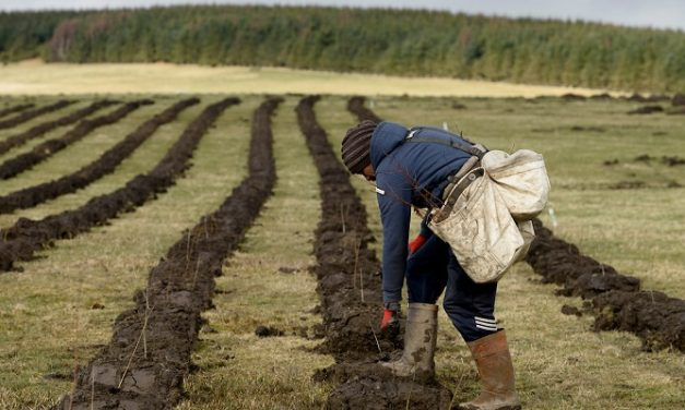 Urgent action required to tackle UK tree planting failure