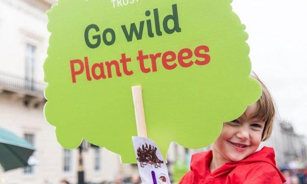 Woodland Trust pledges 50 million trees over five years
