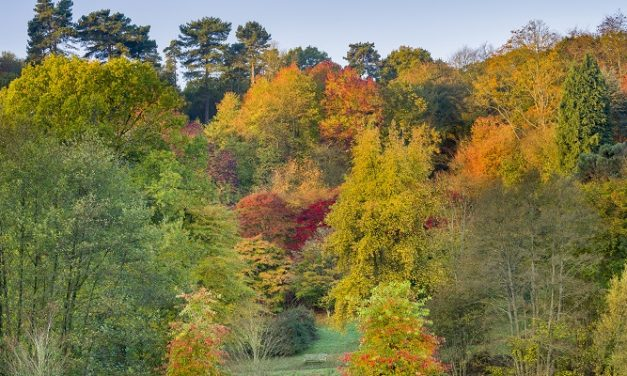 Experts hopeful for a spectacular autumn