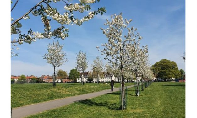 The Vital Role for Trees in Urban Environments