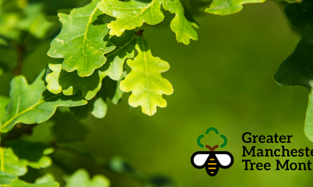 November sees launch of Greater Manchester Tree Month