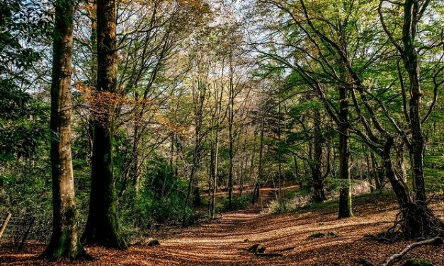 Win for ancient woodland on A27 Arundel bypass route