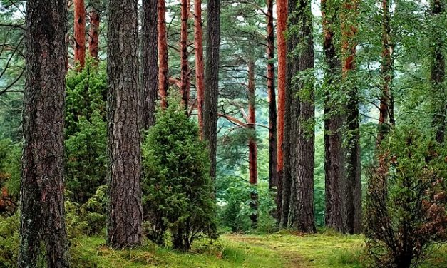 Tree planting and wood use 'vital to Scotland's climate change ambitions'