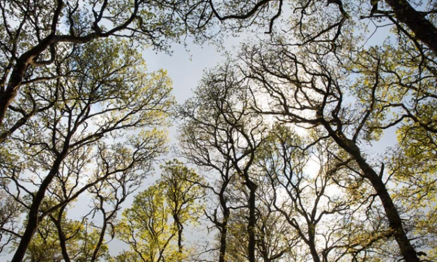 Woodland Trust Scotland calls for higher native tree target