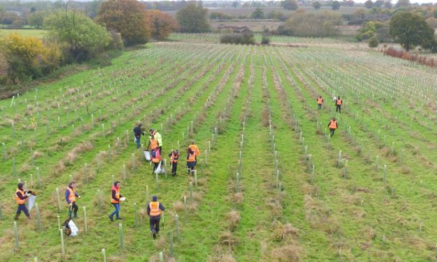 Ground Control marks National Tree Week by funding planting projects