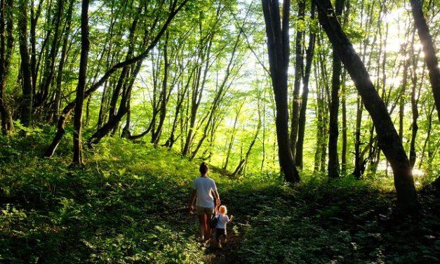 Brand new biodiverse woodland