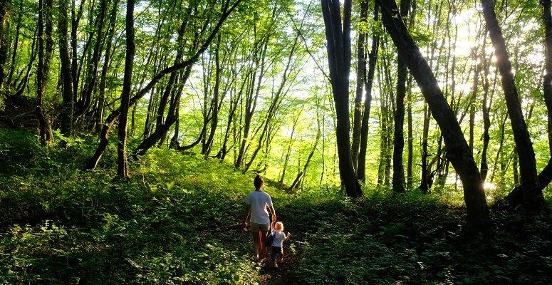 biodiverse woodland