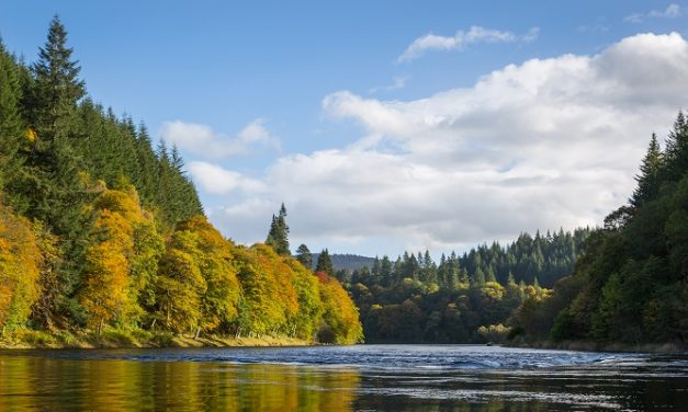 Dunkeld House Hotel reaches £50k milestone for Perthshire's trees