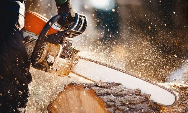 Surrey Police issue alert after illegal chainsaw felling