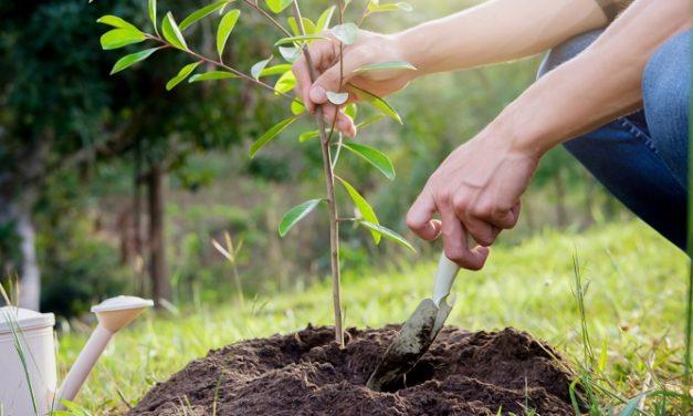 Isle of Wight enjoys tree planting bonanza