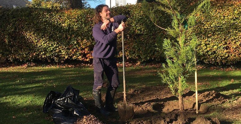trees to be planted in Chippenham