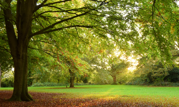 Forestry Commission launches new Tree Production Innovation Fund