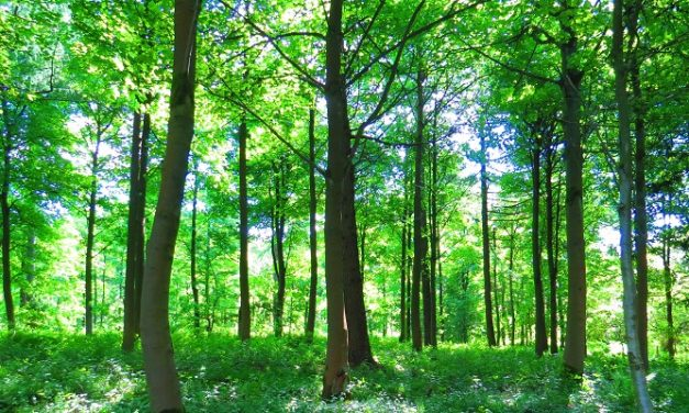 New Community Forest created in the North East