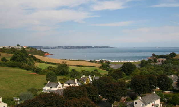 Torbay's trees, 10 years on…