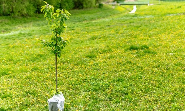 Appeal for local knowledge to achieve tree planting ambitions in York